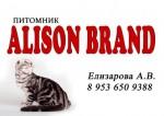 """питомник шотландских кошек """" Alison Brand """""""